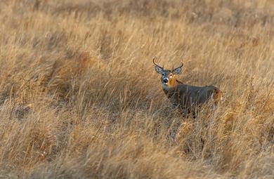 Adjudications publiques des droits de chasse